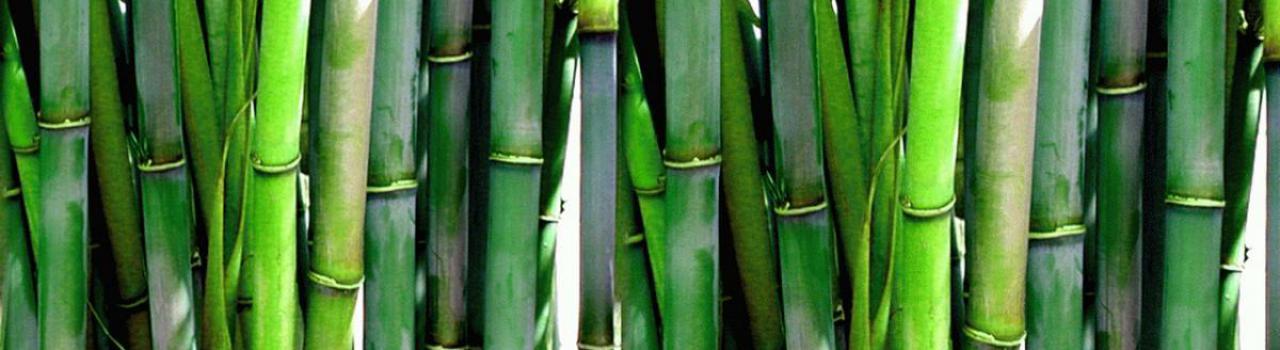 Vše o bambusových pletacích jehlicích